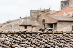 WEB_2013_09_10_Toscana032